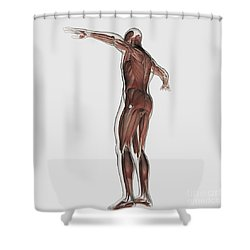 Anatomy Of Male Muscular System Shower Curtain by Stocktrek Images