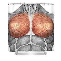 Anatomy Of Male Pectoral Muscles Shower Curtain by Stocktrek Images