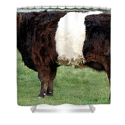 Ancient Breed Belted Galloway Shower Curtain by Richard Ortolano