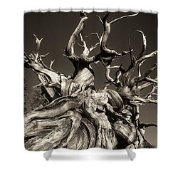 Shower Curtain featuring the photograph Ancient Bristlecone Pine In Black And White by Dave Welling