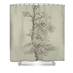 Ancient Oak Tree With A Storks Nest Shower Curtain by Caspar David Friedrich