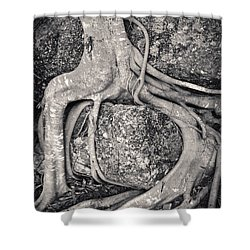 Ancient Roots Shower Curtain by Adam Romanowicz