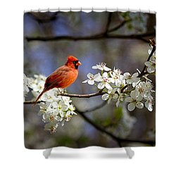 And A Carninal In A Pear Tree Shower Curtain