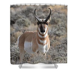 ...and The Antelope Play Shower Curtain