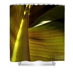 ...and The Bean Stalk Shower Curtain