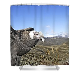 Andean Condor Shower Curtain