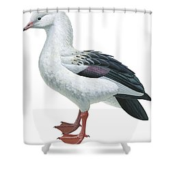 Andean Goose Shower Curtain by Anonymous