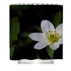 Anemone Nemorosa  By Leif Sohlman Shower Curtain