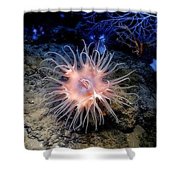Shower Curtain featuring the photograph Anemone Sea Life Sea Ocean Water Underwater by Paul Fearn