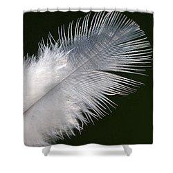 Angel Feather Shower Curtain by Carol Lynch