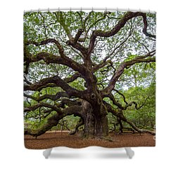 Angel Oak Tree Shower Curtain by Dale Powell
