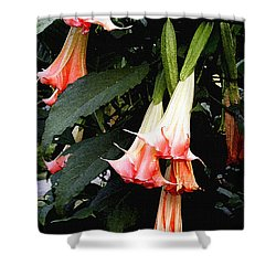 Shower Curtain featuring the photograph Pink Angel Trumpets  by James C Thomas
