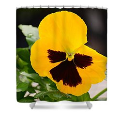 Angel Winged Pansy Shower Curtain by Maria Urso