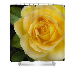 Angelic Rose Shower Curtain