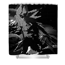 Shower Curtain featuring the photograph Angels Or Dragons B/w by Martin Howard