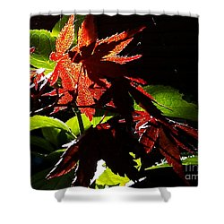 Shower Curtain featuring the photograph Angels Or Dragons by Martin Howard