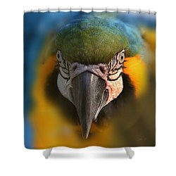 Angry Bird 2 Shower Curtain