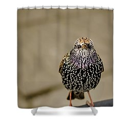 Angry Bird Shower Curtain by Heather Applegate
