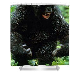 Angry Mountain Gorilla Shower Curtain by Art Wolfe