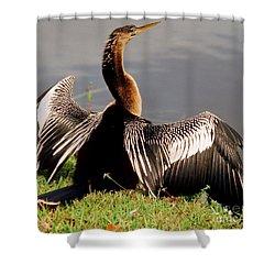 Anhinga Anhinga Anhinga Drying Plumage Shower Curtain