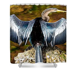 Anhinga  Shower Curtain