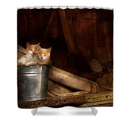 Animal - Cat - Bucket Of Fun  Shower Curtain by Mike Savad