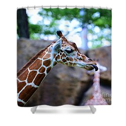 Animal - Giraffe - Sticking Out The Tounge Shower Curtain by Paul Ward