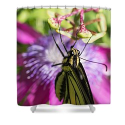Shower Curtain featuring the photograph Anise Swallowtail Butterfly And Passionflower by Priya Ghose