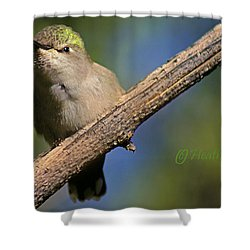 Anna's Hummingbird Baby Shower Curtain by Heather Coen
