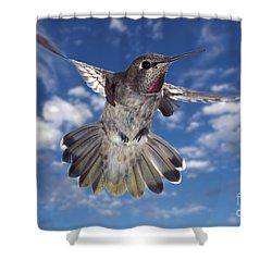 Annas Hummingbird Shower Curtain by Ron Sanford