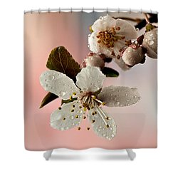 Announcing Spring Shower Curtain by Mary Jo Allen