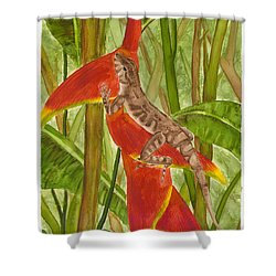 Anolis Humilis Shower Curtain by Cindy Hitchcock