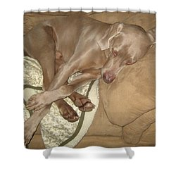 Another Dog Day Shower Curtain