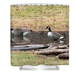 Another Goose Shower Curtain