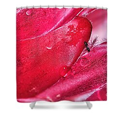 Ant Exploring Protea Petals Shower Curtain by Kaye Menner