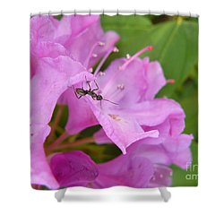 Ant On Flower Shower Curtain by Jane Ford