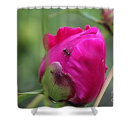 Shower Curtain featuring the photograph Ant On Peony by Ann E Robson