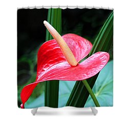 Anthurium Shower Curtain by Mariarosa Rockefeller
