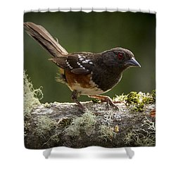 Anticipation Shower Curtain by Jean Noren