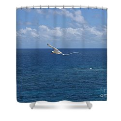 Antigua - In Flight Shower Curtain by HEVi FineArt