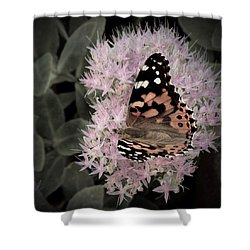 Shower Curtain featuring the photograph Antique Monarch by Photographic Arts And Design Studio