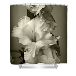 Antiqued Gladiolus Shower Curtain