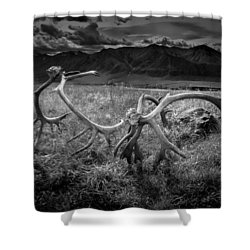 Antlers In Black And White Shower Curtain by Andrew Matwijec