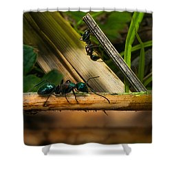 Ants Adventure 2 Shower Curtain by Bob Orsillo