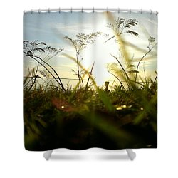 Shower Curtain featuring the photograph Ant's Eye View by Thomasina Durkay