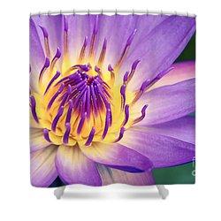 Ao Lani Heavenly Light Shower Curtain by Sharon Mau