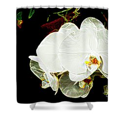 Aos White Orchid 1 Shower Curtain