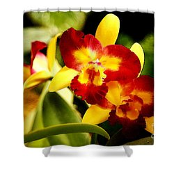 Aos Yellow Orchid 2 Shower Curtain