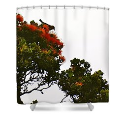Apapane Atop An Orange Ohia Lehua Tree  Shower Curtain