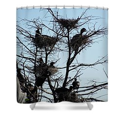 Apartment Building With One Vacancy Shower Curtain